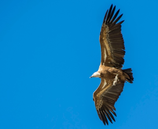 Resultado de imagen de parque nacional de monfrague buitre